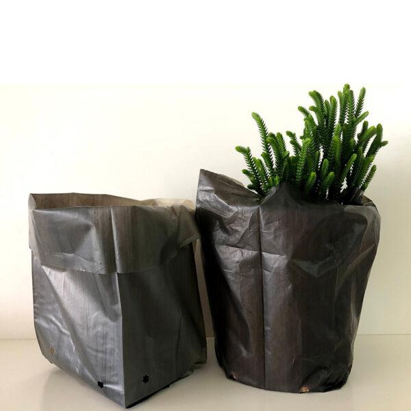 Bolsas Cultivo Almidon de Maiz